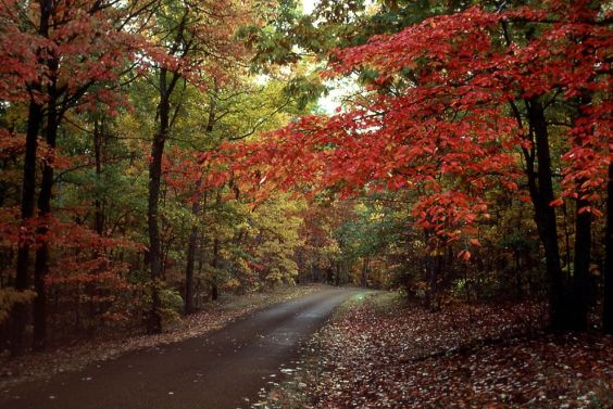 Mississippi-Natchez-Trace-Parkway-fall-foliage